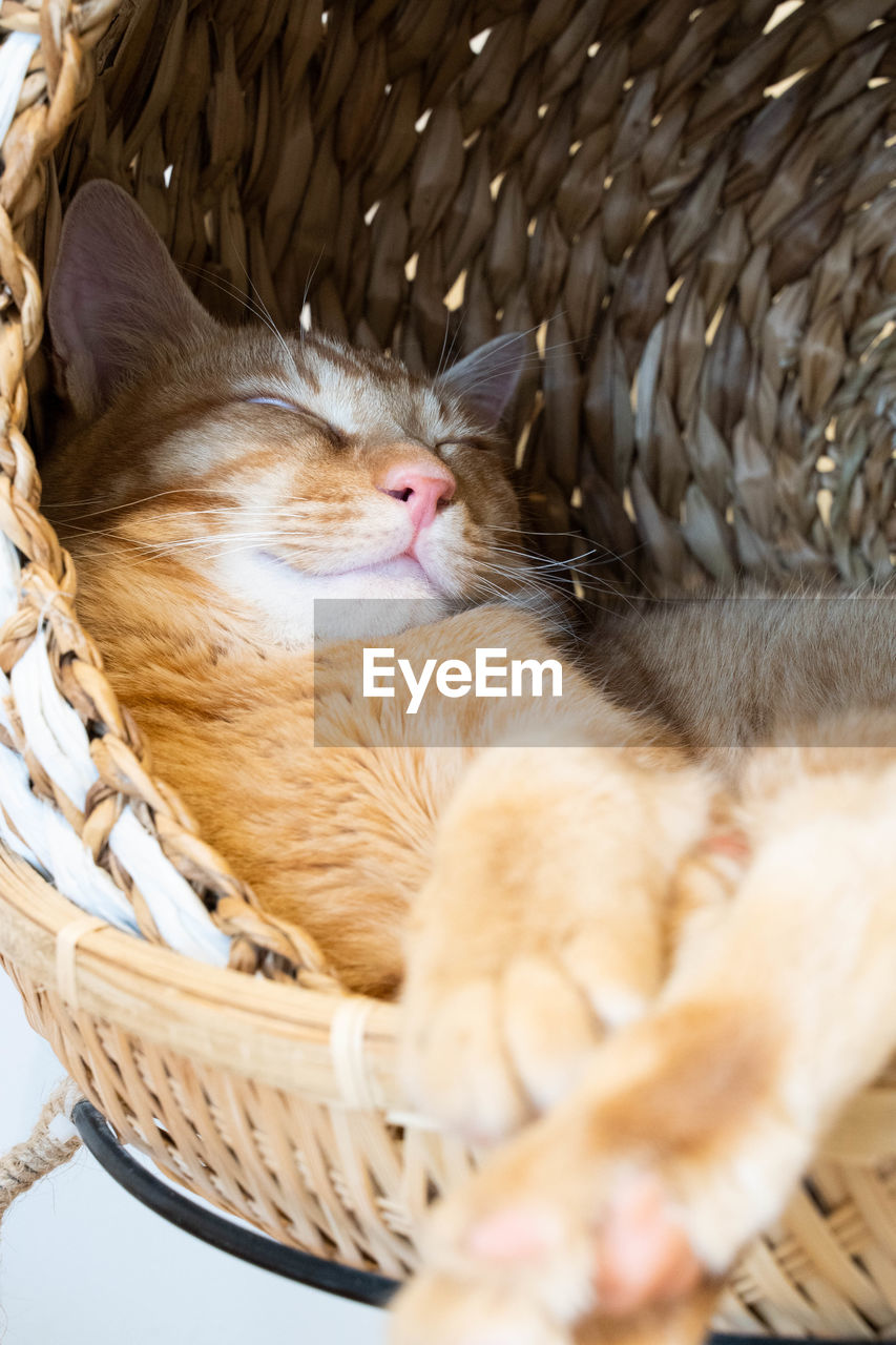 mammal, animal themes, animal, cat, domestic cat, feline, domestic, pets, domestic animals, relaxation, vertebrate, basket, one animal, wicker, container, no people, whisker, indoors, resting, sleeping, kitten, animal head