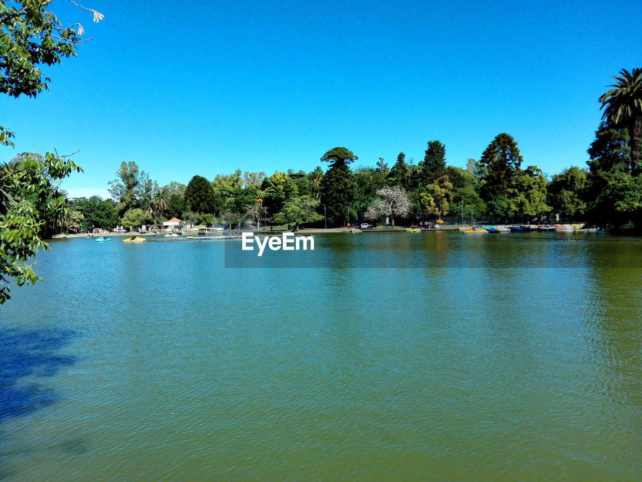 tree, water, clear sky, blue, palm tree, tranquility, sea, tranquil scene, outdoors, scenics, swimming pool, nature, beauty in nature, day, no people, sky
