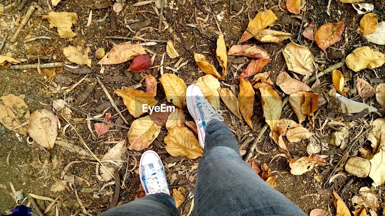 LOW SECTION OF PERSON IN AUTUMN LEAVES