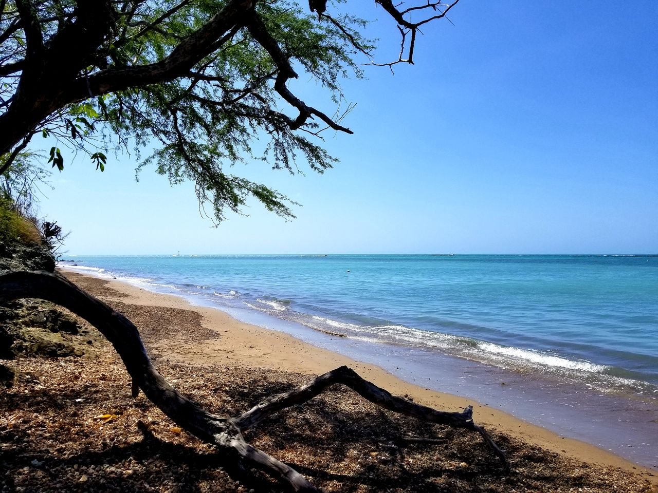 sea, water, beach, land, sky, horizon over water, horizon, scenics - nature, beauty in nature, tranquility, tranquil scene, tree, nature, plant, sand, clear sky, no people, blue, day, outdoors