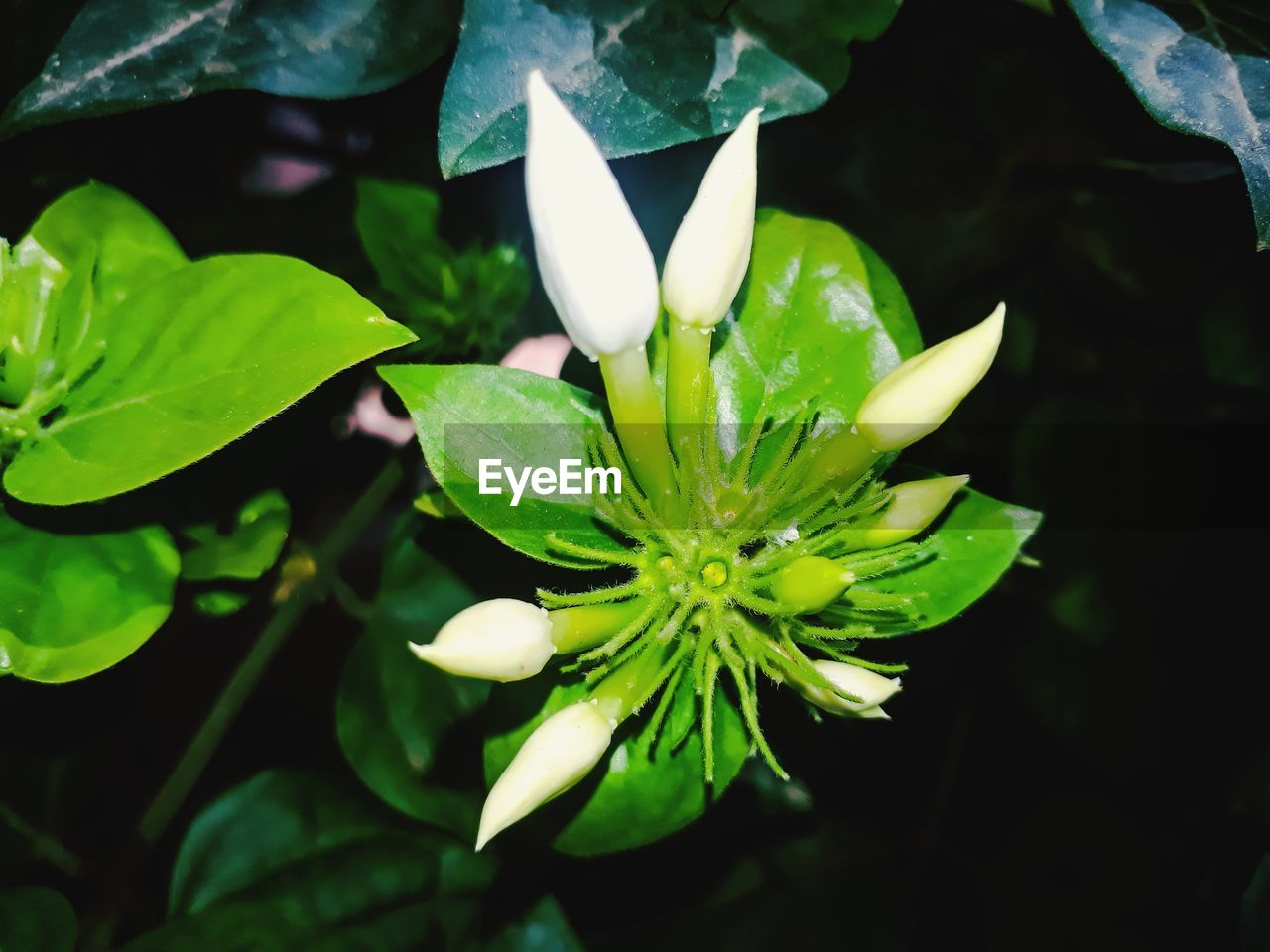 growth, plant, nature, beauty in nature, leaf, green color, petal, flower, fragility, freshness, no people, close-up, flower head, outdoors, water, day, blooming