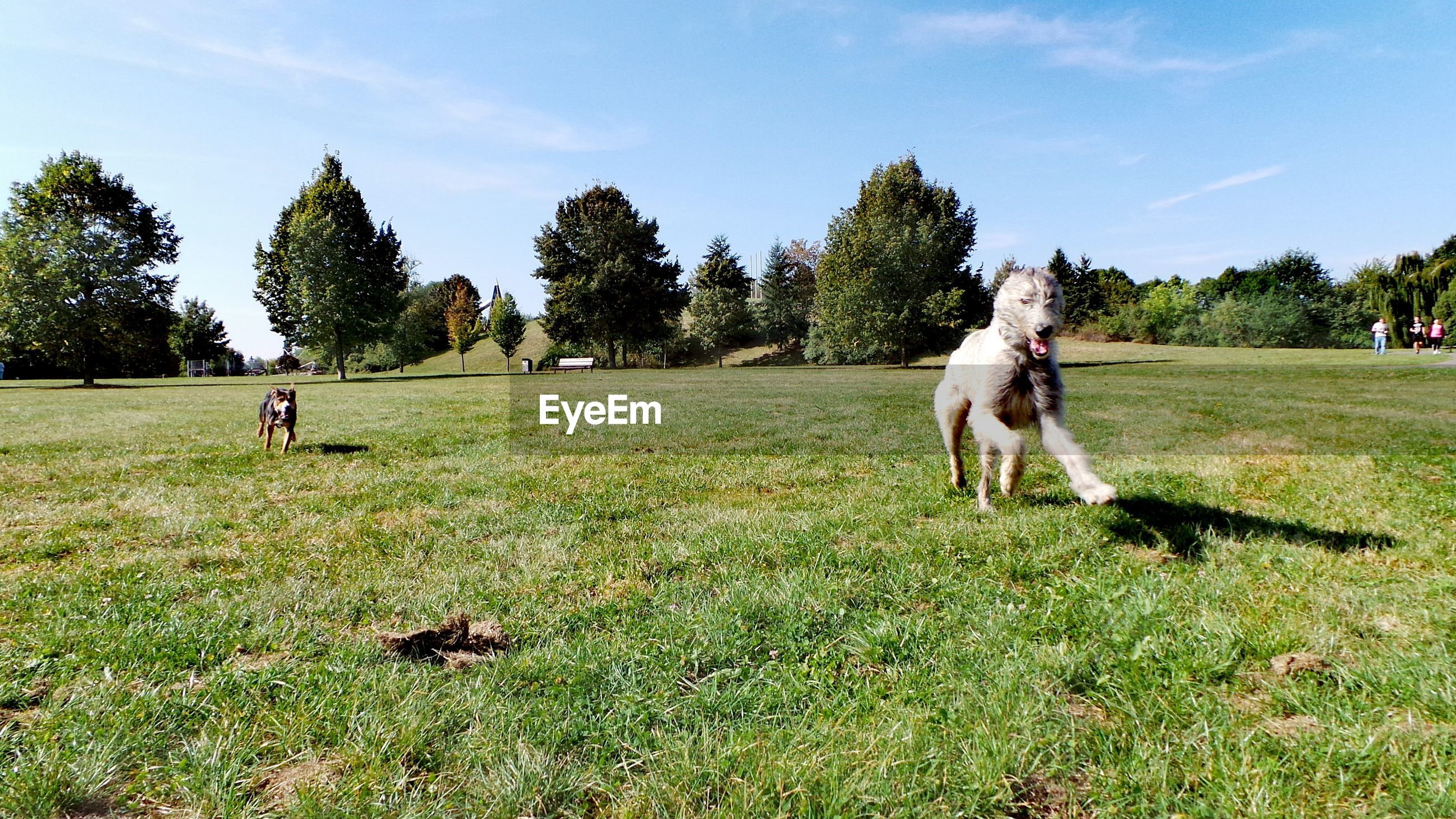 Dogs running on grassy field against sky during sunny day