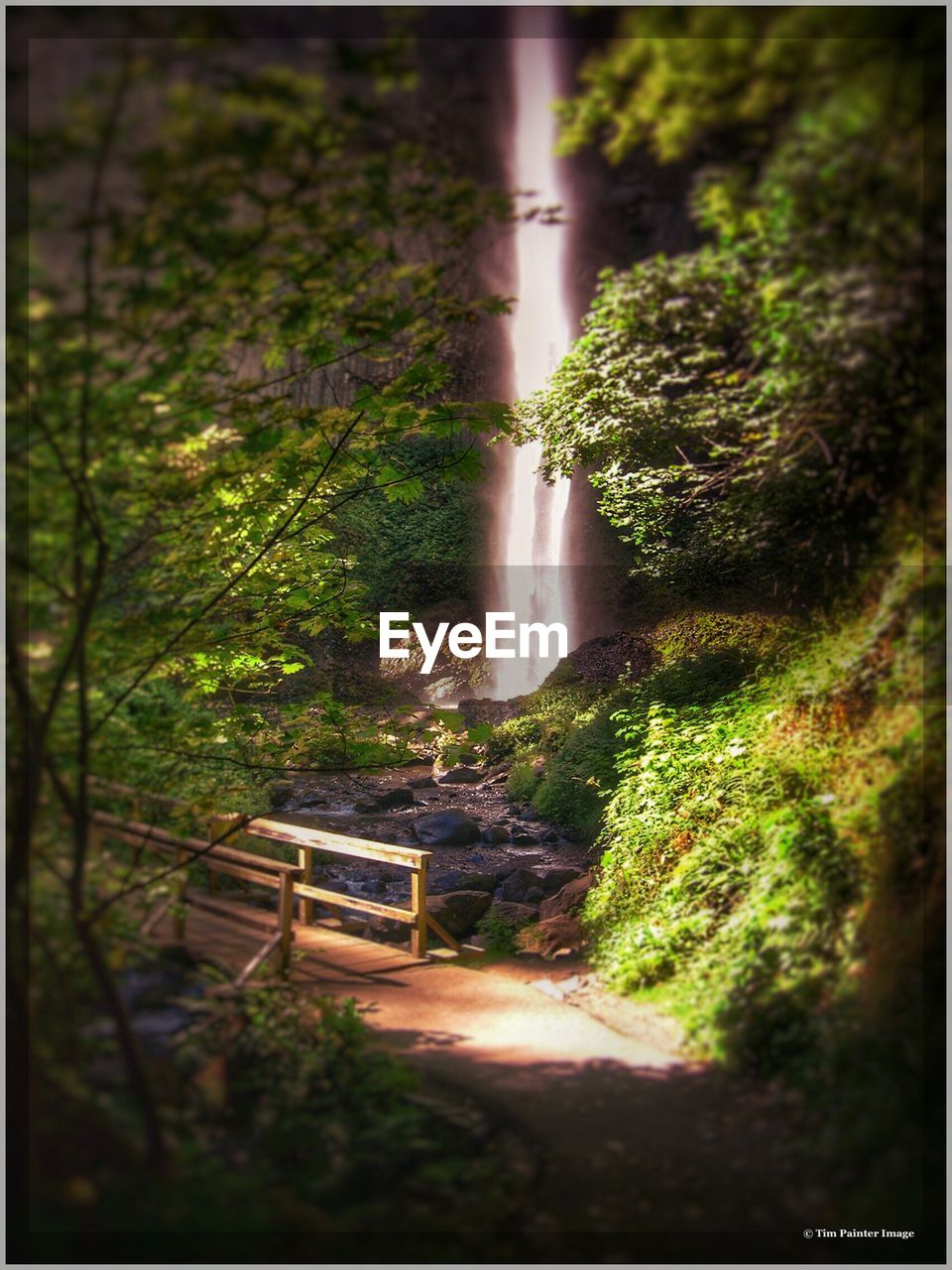 waterfall, forest, tree, no people, nature, outdoors, day, water, scenics, beauty in nature
