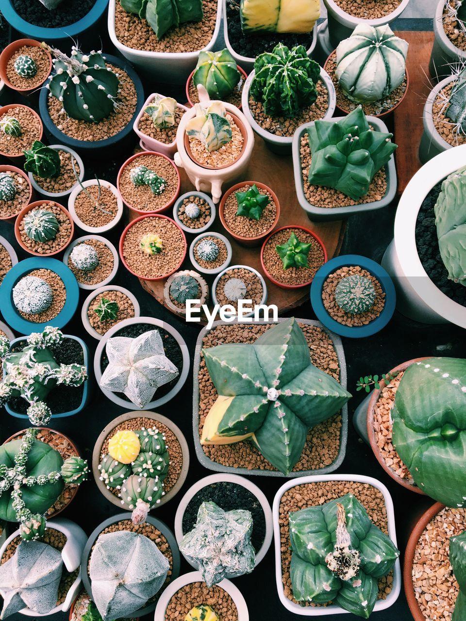 Full Frame Shot Of Various Succulent Potted Plants For Sale At Market