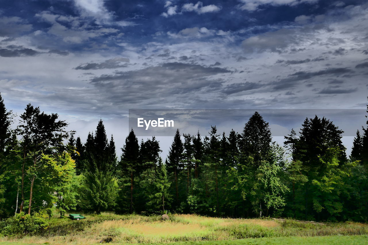tree, nature, growth, sky, forest, no people, beauty in nature, tranquility, tranquil scene, cloud - sky, landscape, scenics, grass, outdoors, day