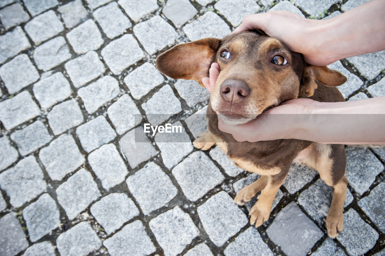 Hands Holding The Head Of A Cute Dog