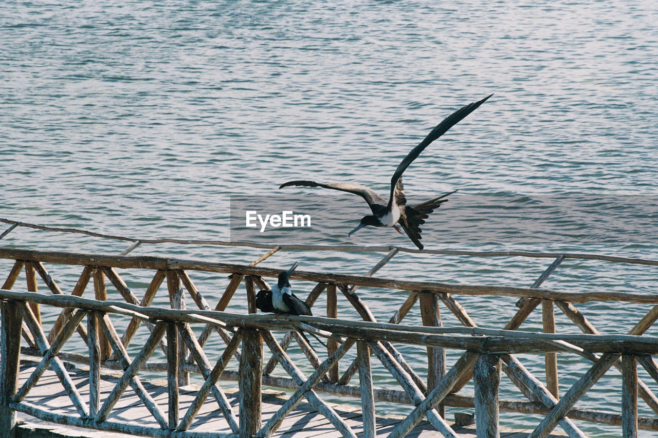 animal wildlife, animals in the wild, animal themes, animal, vertebrate, bird, spread wings, flying, water, one animal, no people, lake, nature, day, outdoors, seagull, motion, beauty in nature