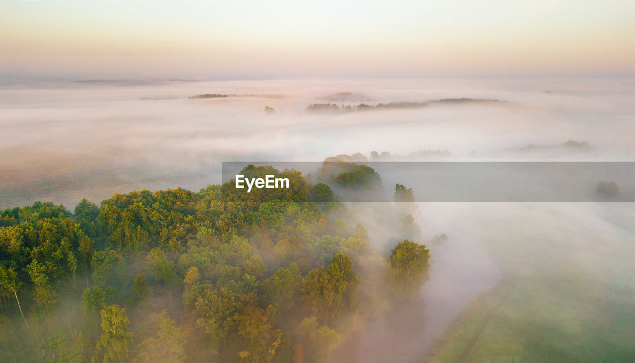 beauty in nature, scenics - nature, sky, tranquility, tranquil scene, plant, fog, nature, tree, no people, non-urban scene, environment, idyllic, cloud - sky, landscape, growth, day, land, outdoors, hazy