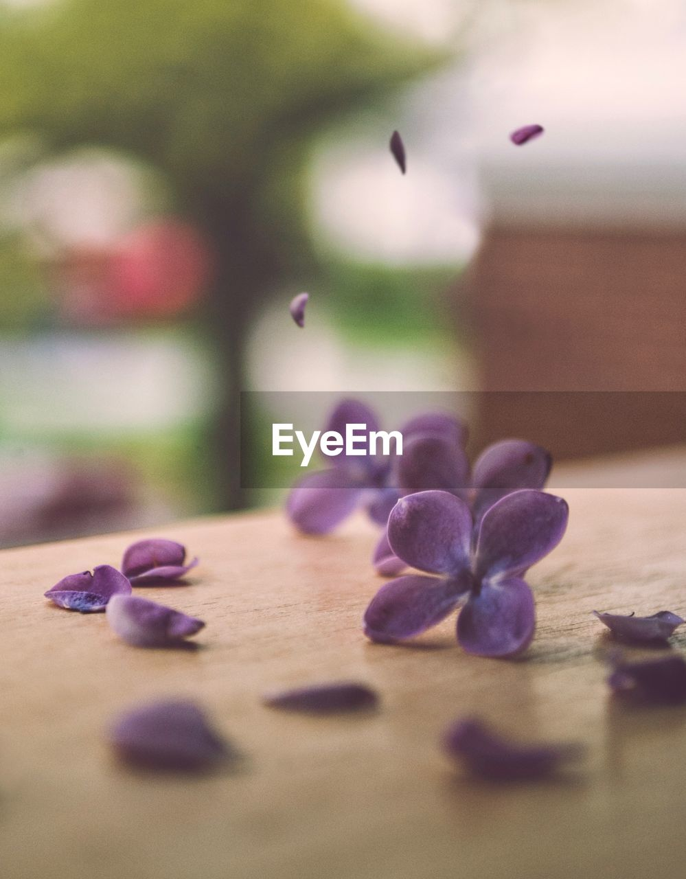 selective focus, close-up, freshness, flower, flowering plant, no people, table, indoors, purple, food, food and drink, petal, wood - material, day, beauty in nature, large group of objects, plant, blueberry, nature, still life, pebble
