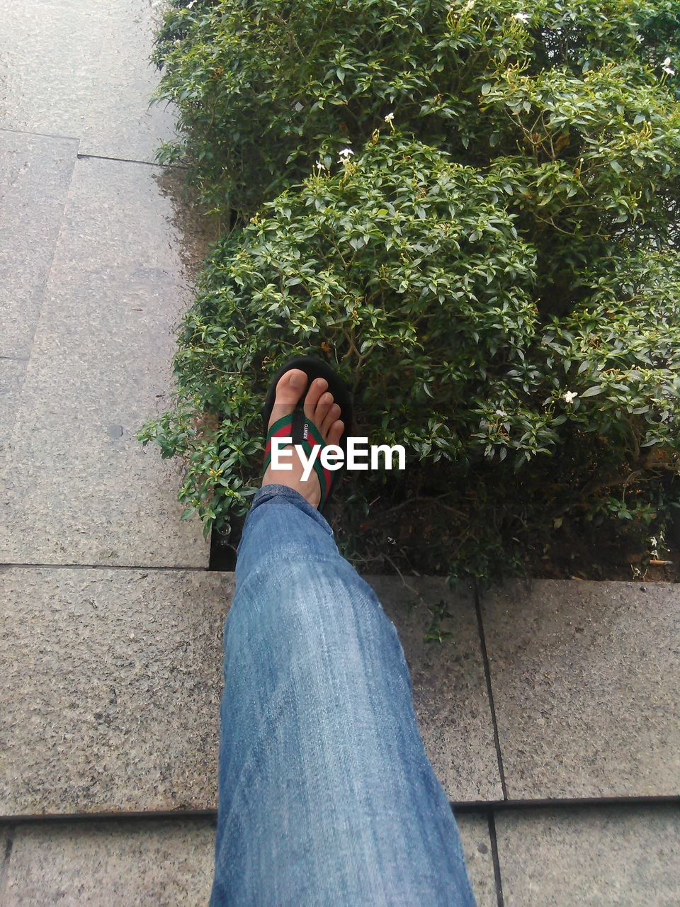 human leg, jeans, one person, low section, human body part, shoe, personal perspective, growth, real people, day, standing, outdoors, plant, women, men, nature, adult, people