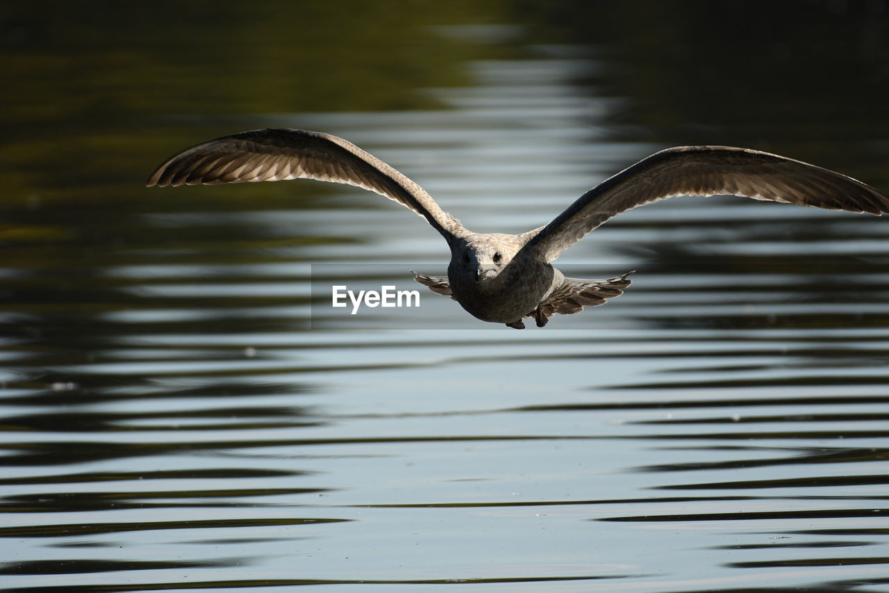 Flying Over Lake