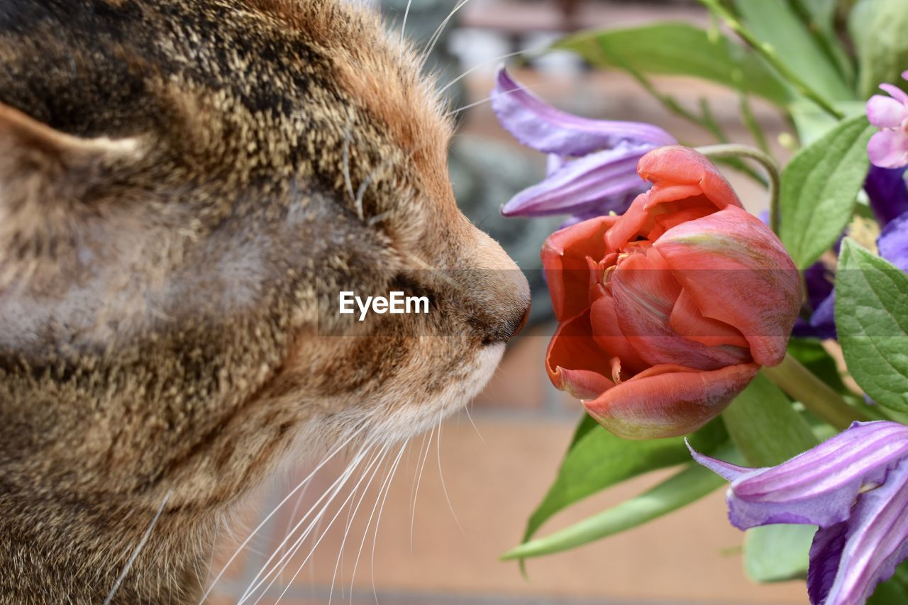 close-up, flowering plant, mammal, flower, one animal, animal, plant, animal themes, beauty in nature, cat, feline, no people, domestic cat, vulnerability, focus on foreground, domestic animals, fragility, freshness, nature, vertebrate, whisker, flower head, animal head, tabby