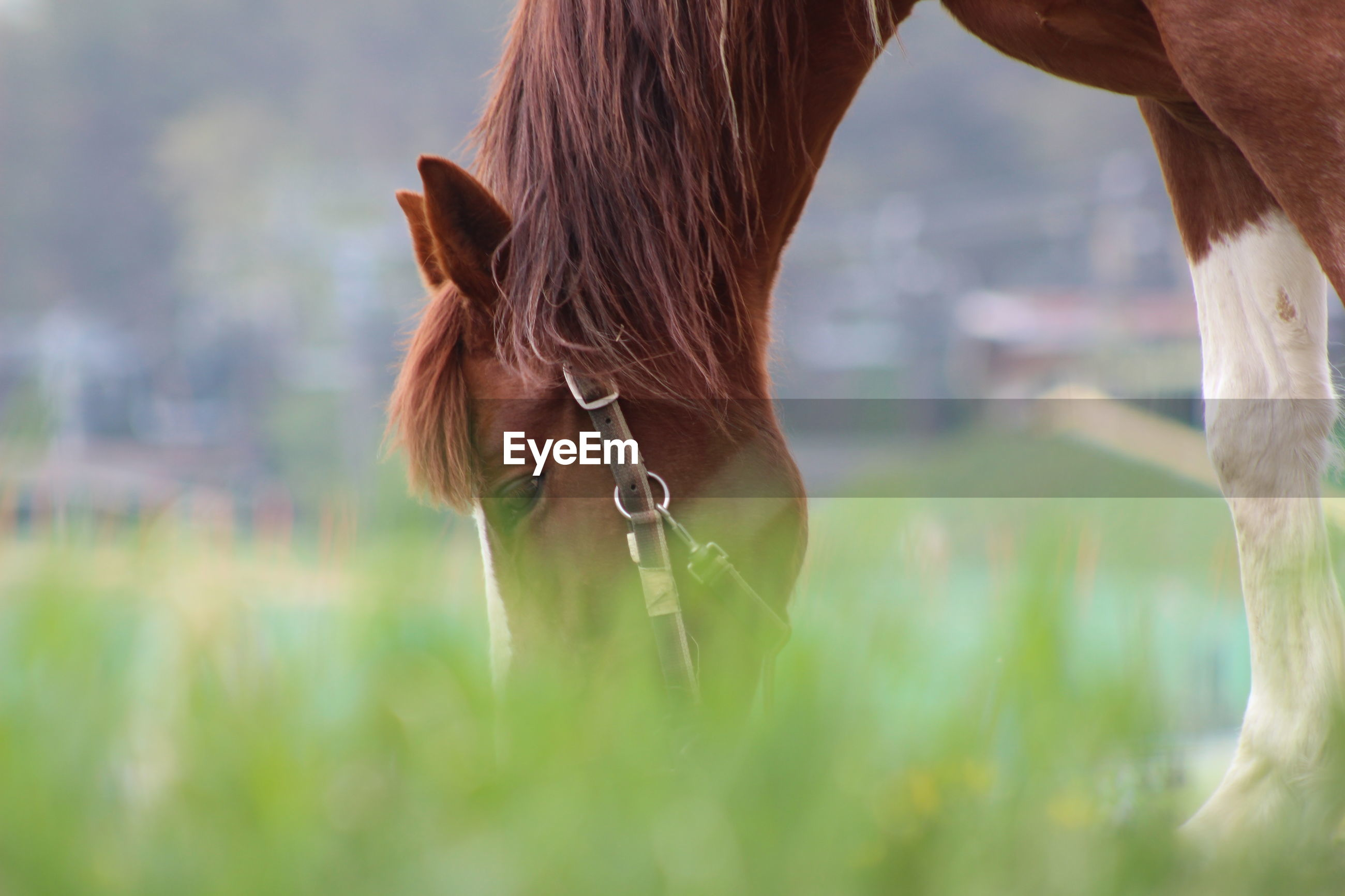 animal themes, horse, one animal, focus on foreground, wildlife, field, close-up, nature, tree, animals in the wild, mammal, livestock, grass, day, outdoors, part of, brown, standing, herbivorous, side view