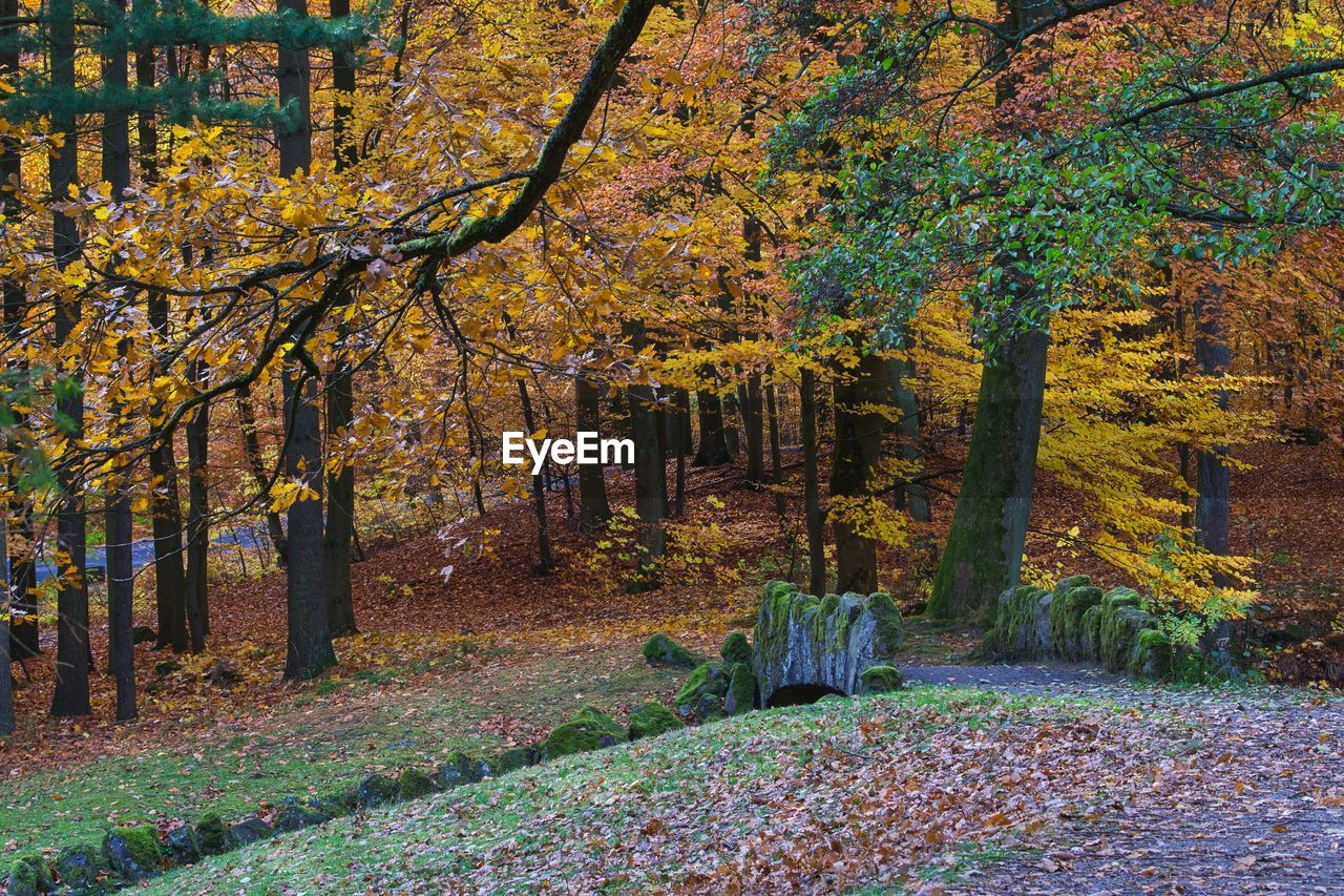 tree, autumn, plant, change, forest, land, beauty in nature, growth, tranquility, nature, tranquil scene, plant part, leaf, day, no people, scenics - nature, trunk, tree trunk, footpath, outdoors, woodland, autumn collection, fall, leaves