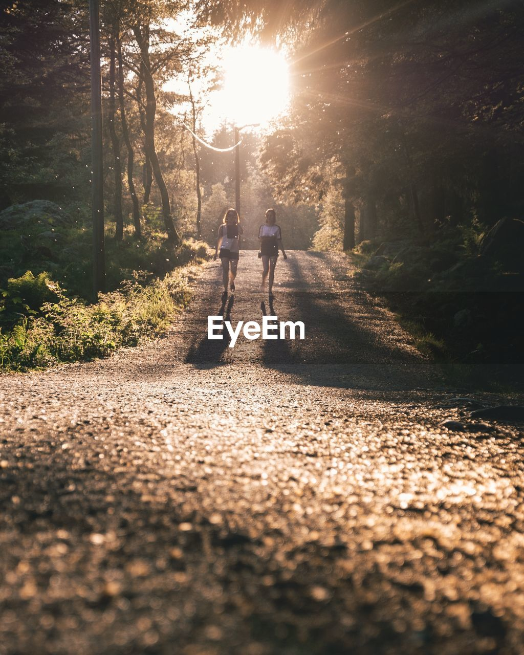 Full Length Of Friends Walking On Road Amidst Trees In Forest During Sunny Day