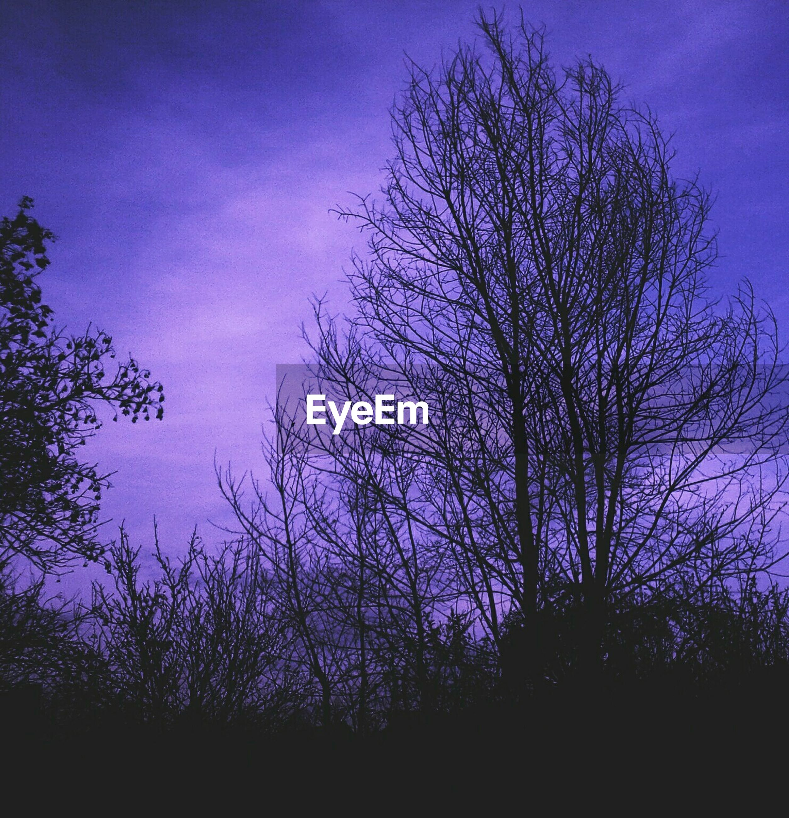 purple, nature, tree, sky, silhouette, no people, growth, beauty in nature, plant, outdoors, tranquility, night, star - space