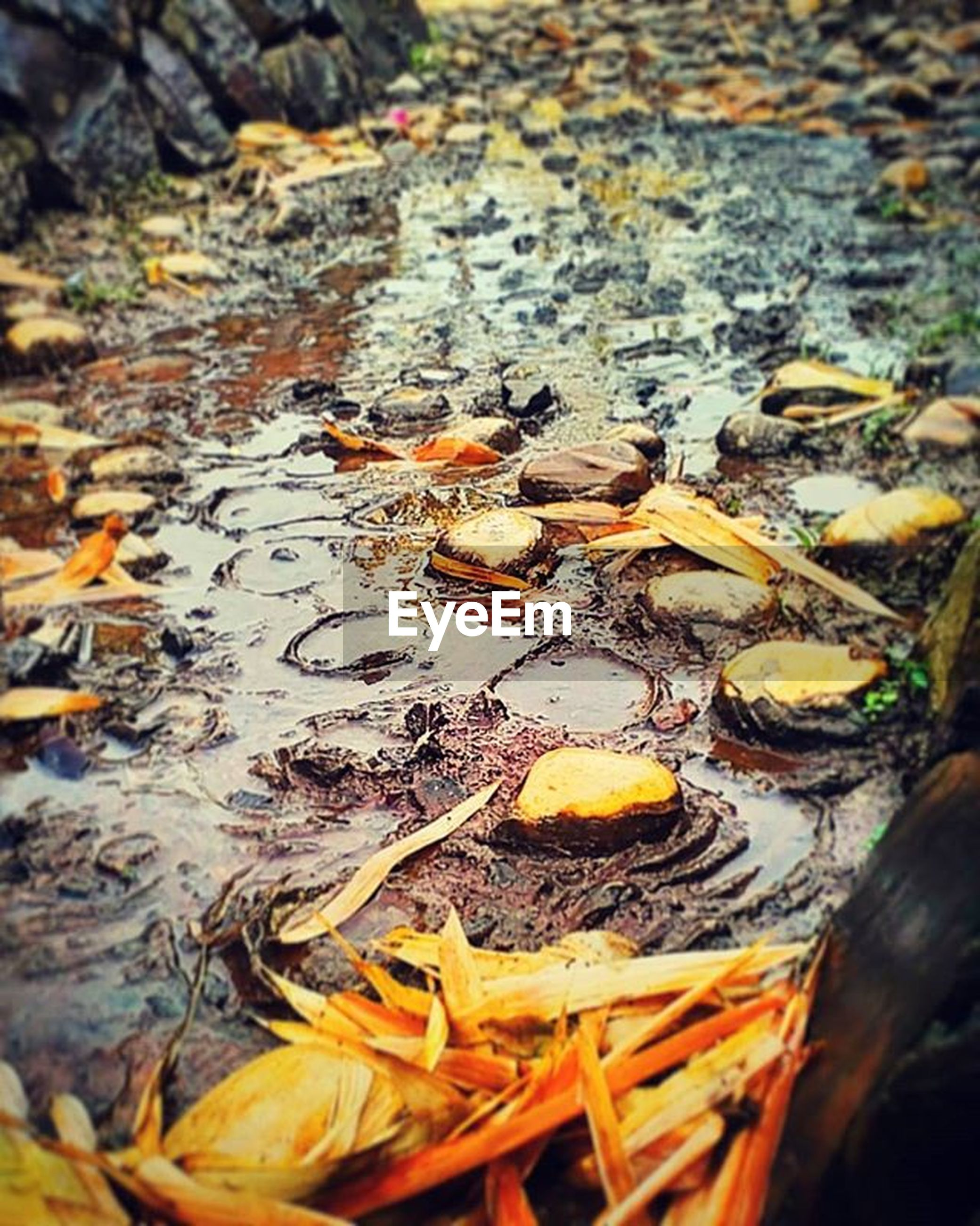 water, high angle view, leaf, autumn, reflection, leaves, pond, change, floating on water, nature, fallen, lake, waterfront, orange color, yellow, dry, outdoors, animal themes, day, no people