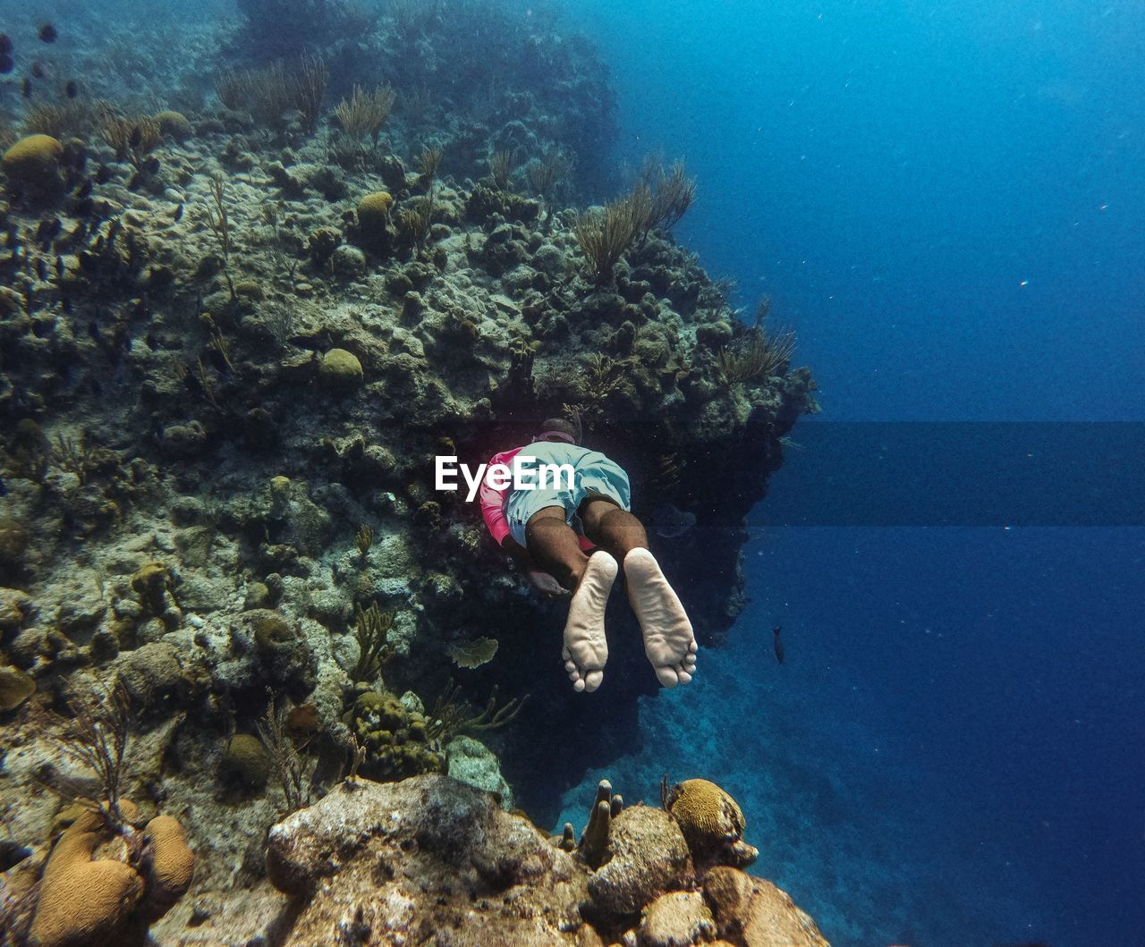 underwater, water, sea, undersea, sea life, animal wildlife, animals in the wild, swimming, animal themes, invertebrate, marine, animal, coral, nature, one person, real people, rock, solid, leisure activity, outdoors, underwater diving