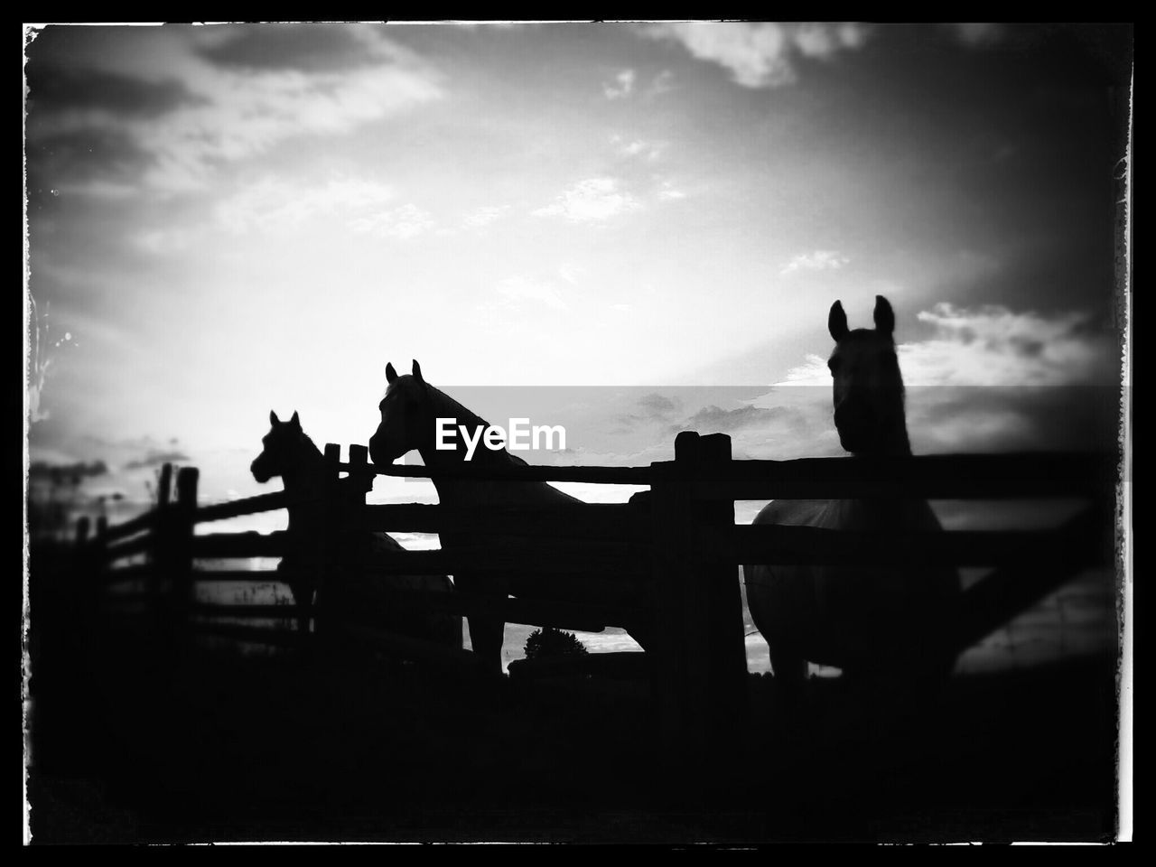 Silhouette Horses Standing By Fence In Ranch Against Sky