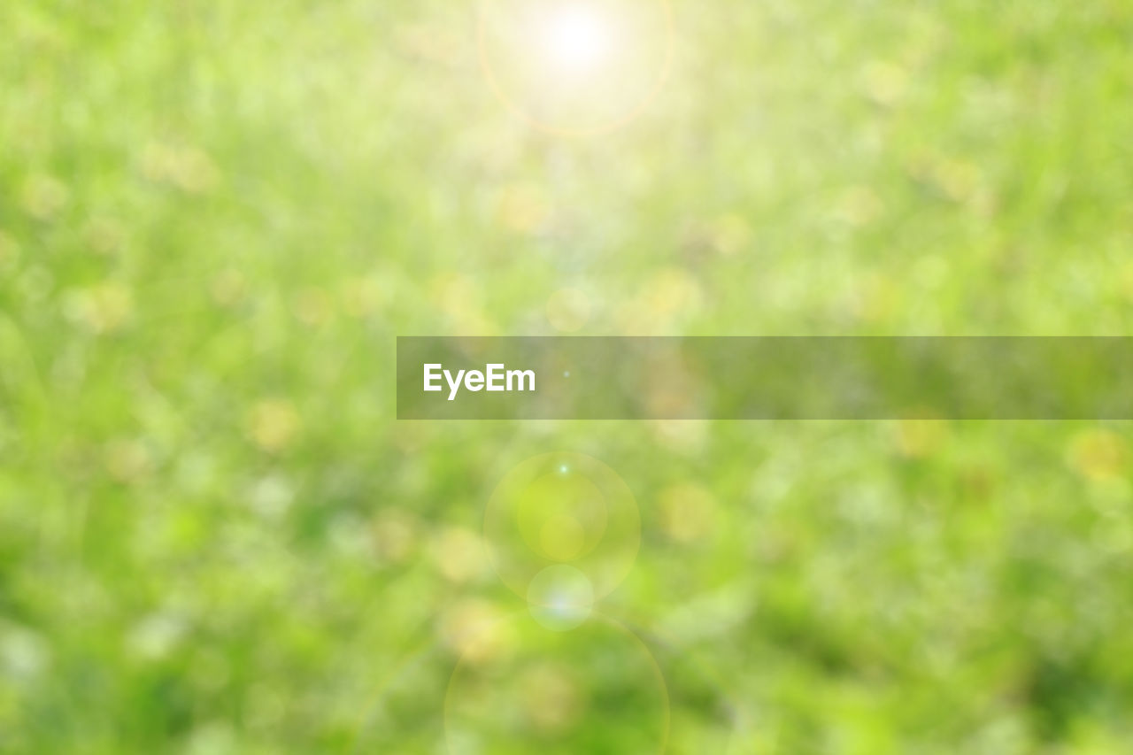 plant, beauty in nature, no people, lens flare, sunlight, green color, nature, day, outdoors, growth, tranquility, tree, close-up, selective focus, sun, focus on foreground, fragility, sunny, vulnerability, backgrounds, bright, purity
