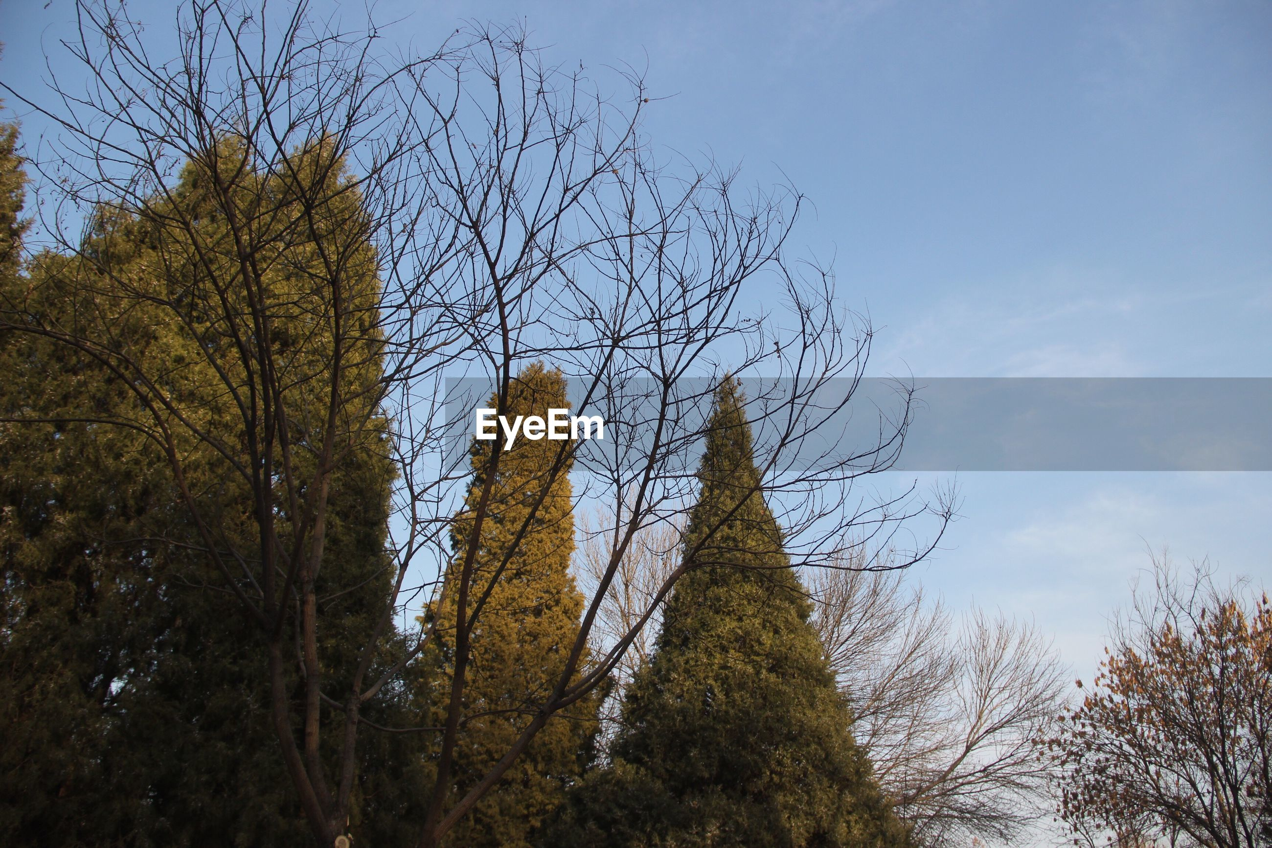 tree, sky, low angle view, nature, no people, outdoors, growth, day, scenics, beauty in nature