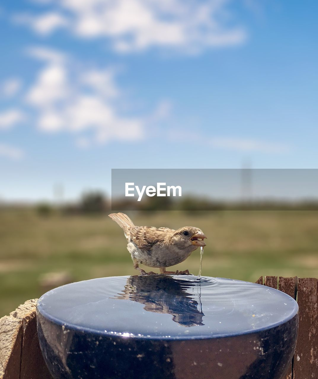 focus on foreground, day, nature, no people, sky, close-up, food and drink, animal, animal themes, food, outdoors, bird, animal wildlife, one animal, vertebrate, animals in the wild, water, land, cloud - sky, table