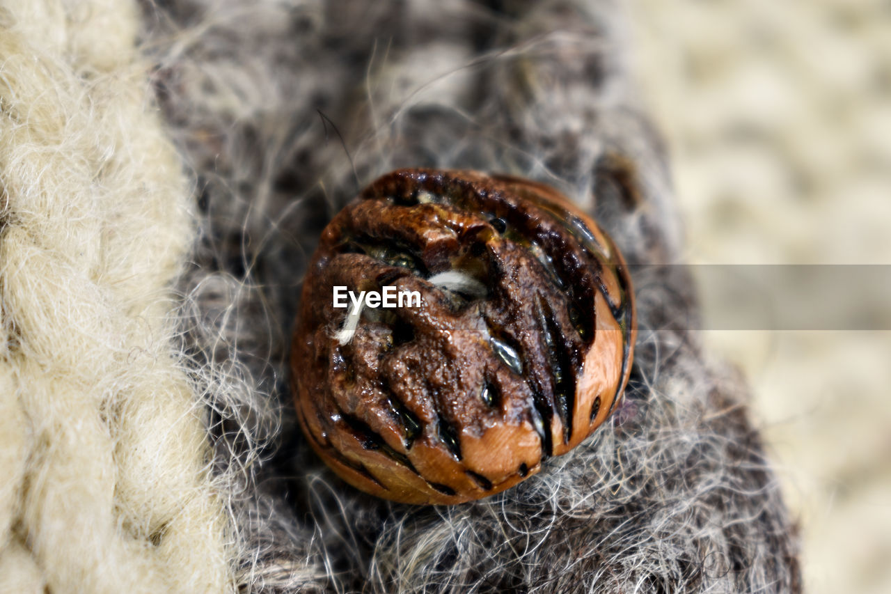 close-up, food, no people, food and drink, still life, focus on foreground, selective focus, nature, day, freshness, outdoors, high angle view, nut - food, healthy eating, nut, land, wellbeing, pattern, brown