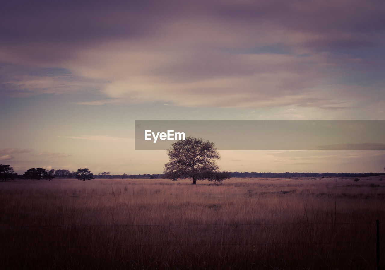 Tree on grassy field during sunset