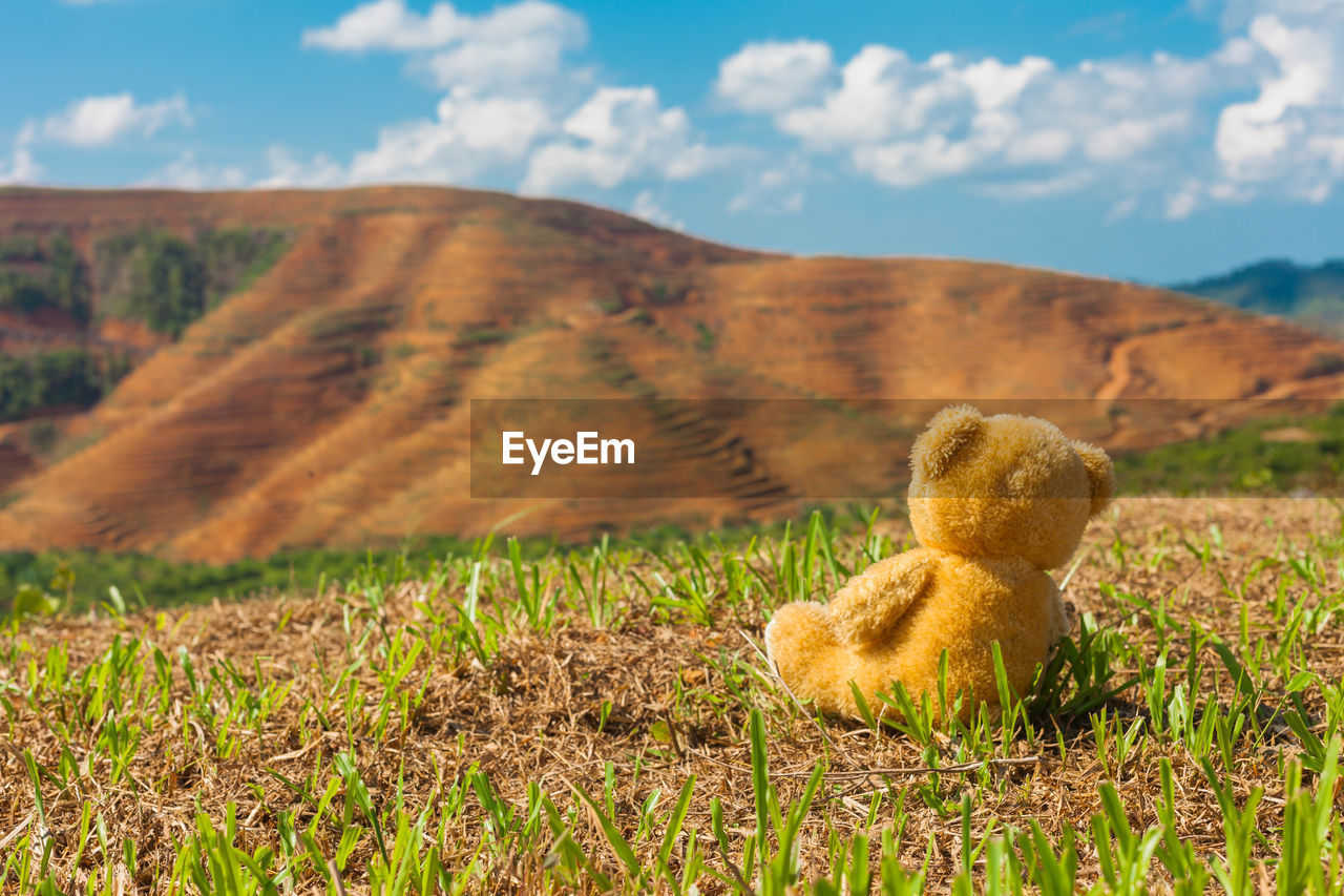 sky, field, nature, landscape, land, mountain, cloud - sky, no people, environment, day, plant, beauty in nature, mammal, sunlight, grass, scenics - nature, non-urban scene, outdoors, stuffed toy, tranquil scene