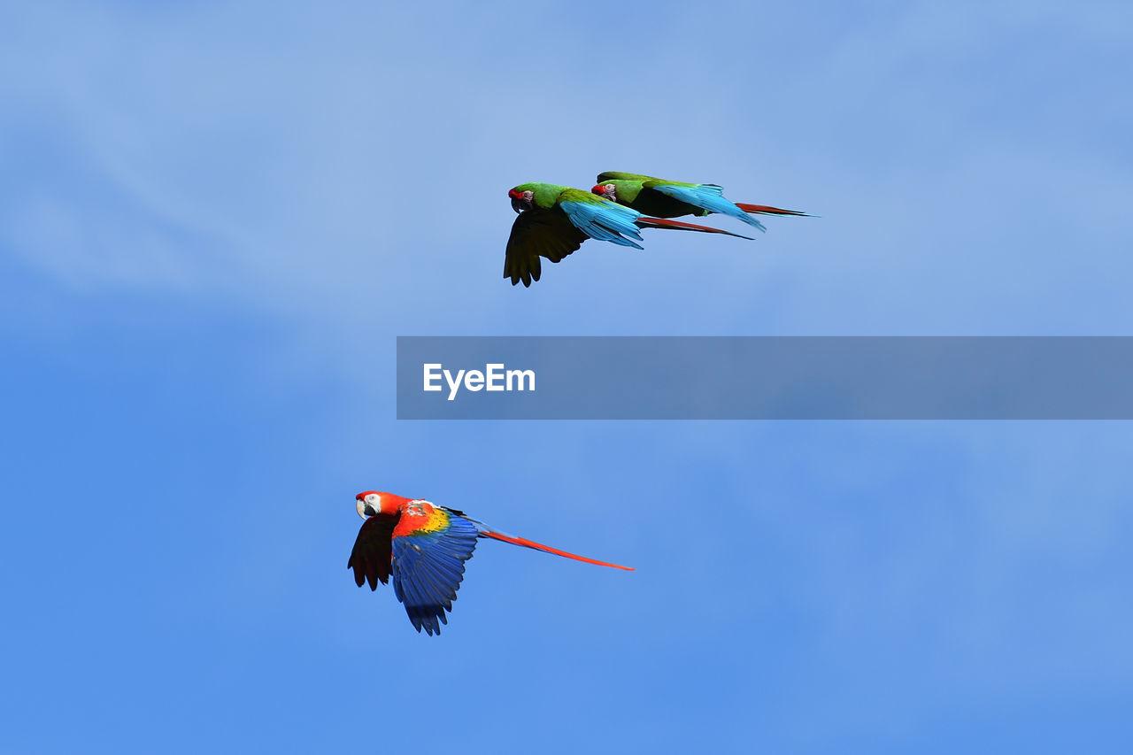 Parrot Flying Animal Themes Sky Nature Animal Wildlife Bird Group Of Animals