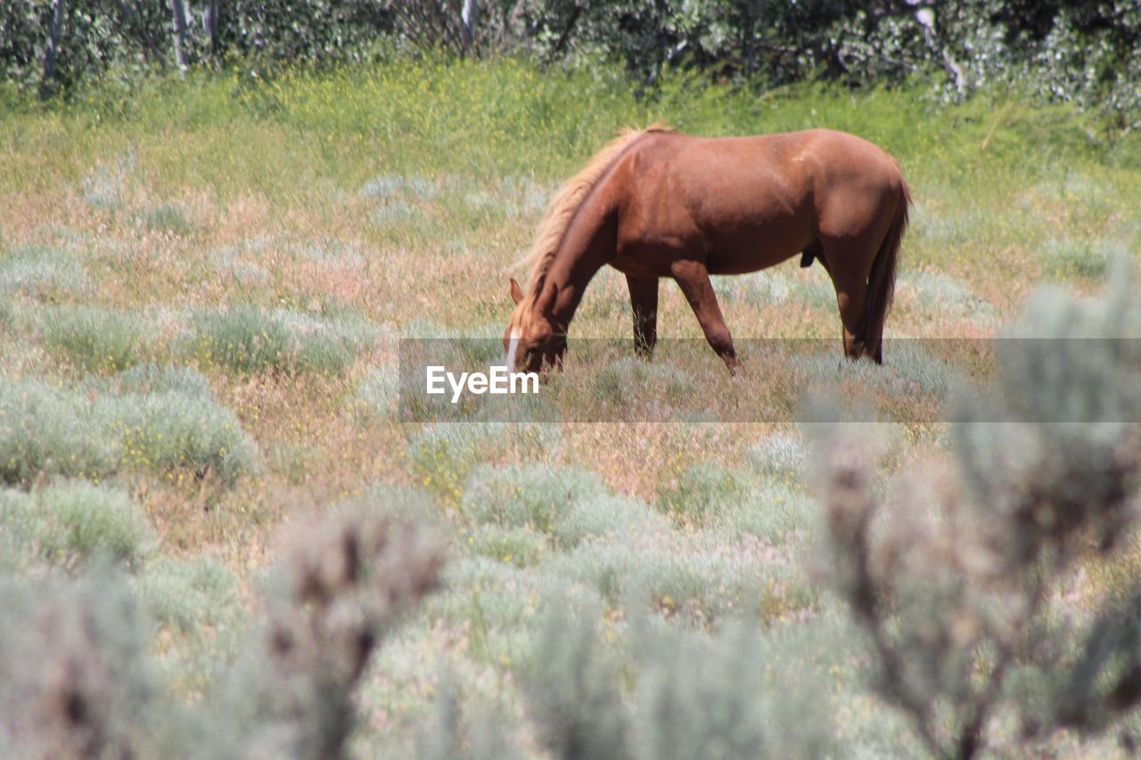 animal themes, animal, mammal, one animal, animal wildlife, vertebrate, domestic animals, plant, livestock, field, land, animals in the wild, grass, no people, domestic, grazing, nature, horse, day, agriculture, herbivorous, outdoors, profile view