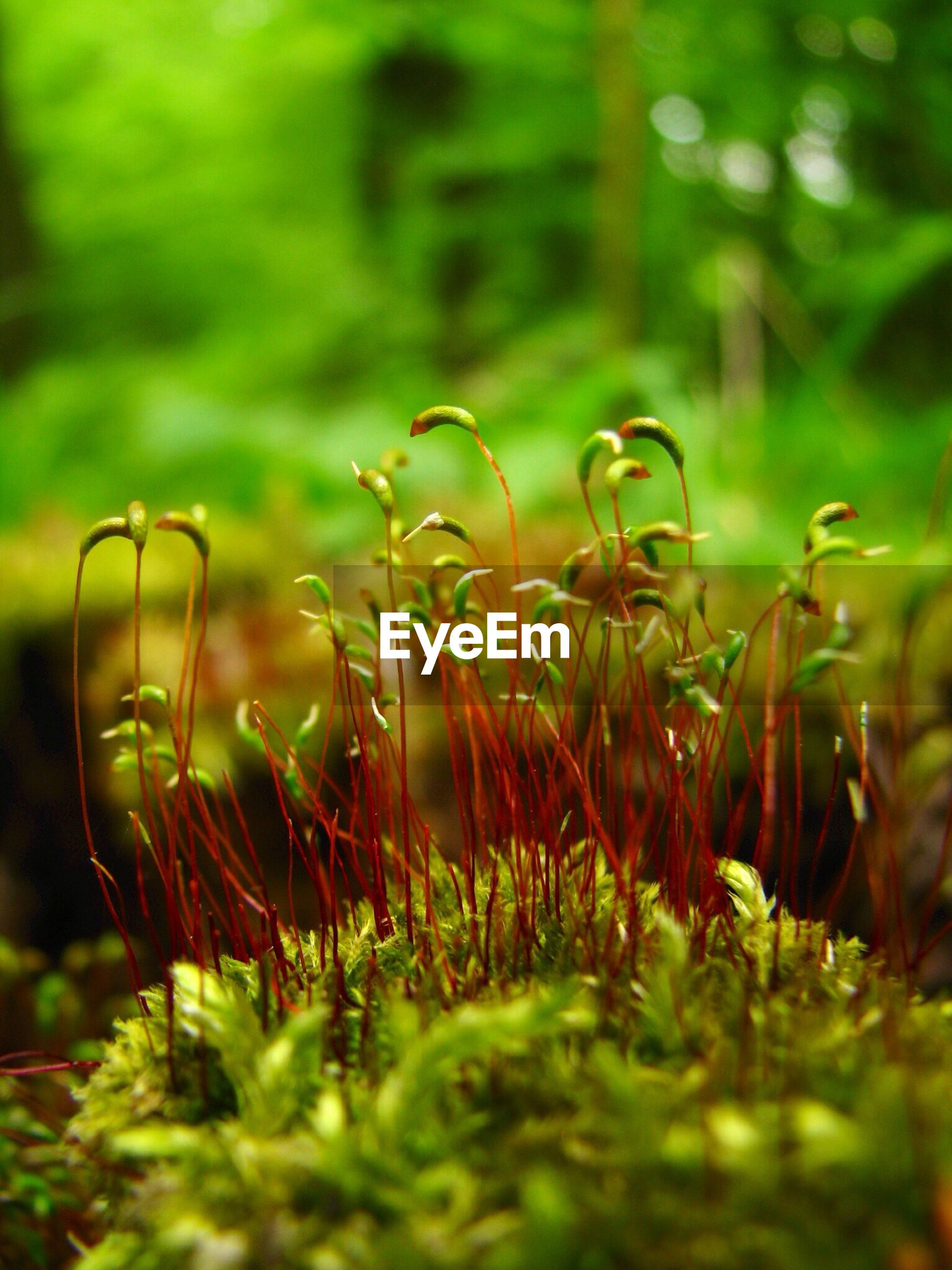 growth, plant, close-up, focus on foreground, flower, selective focus, freshness, nature, beauty in nature, field, grass, green color, fragility, bud, stem, growing, day, outdoors, no people, beginnings