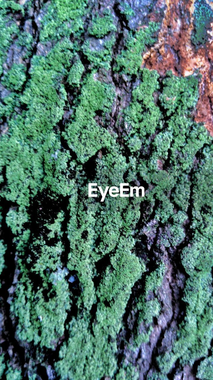 textured, green color, backgrounds, close-up, full frame, nature, no people, pattern, rough, growth, moss, lichen, fungus, day, outdoors, plant, tree, beauty in nature