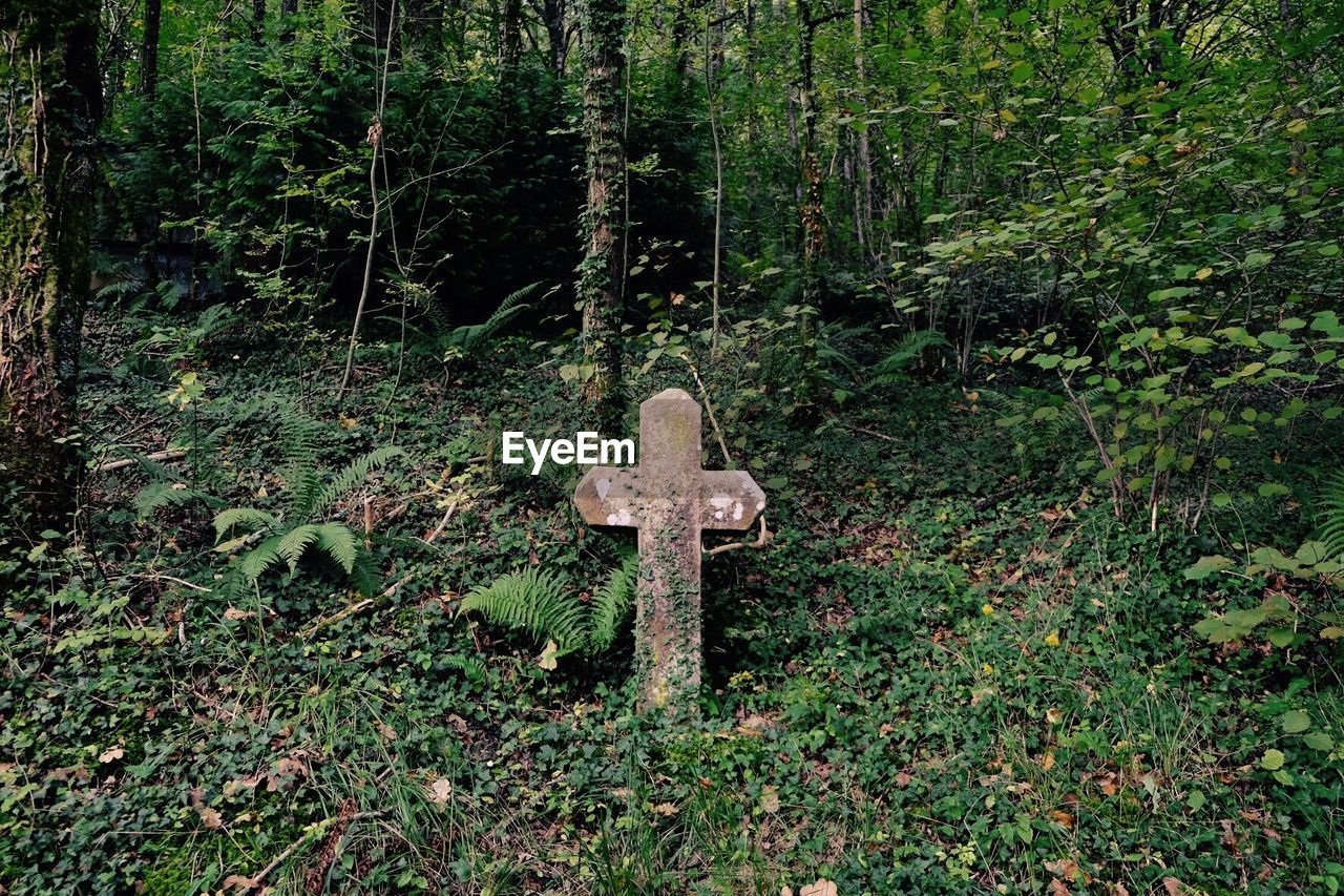 Tomb Stone In Cemetery At Forest