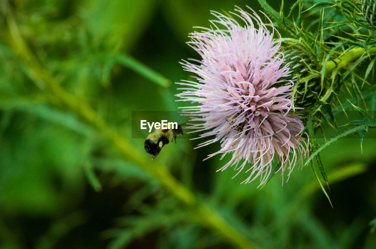 flowering plant, flower, plant, fragility, beauty in nature, vulnerability, growth, freshness, close-up, animals in the wild, invertebrate, insect, petal, flower head, animal wildlife, nature, animal themes, animal, bee, inflorescence, no people, outdoors, purple, pollination