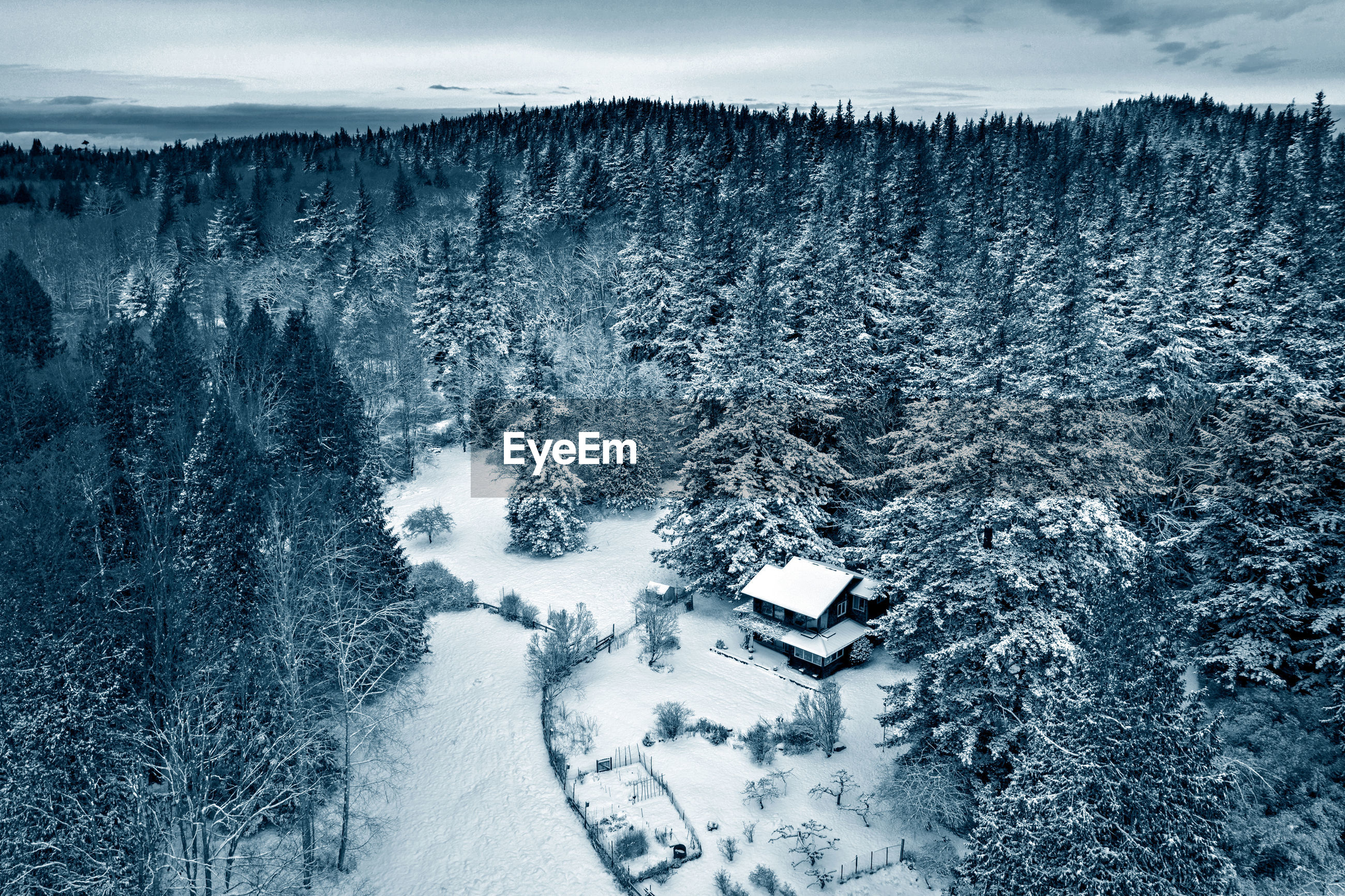 HIGH ANGLE VIEW OF SNOW COVERED LAND AND TREES