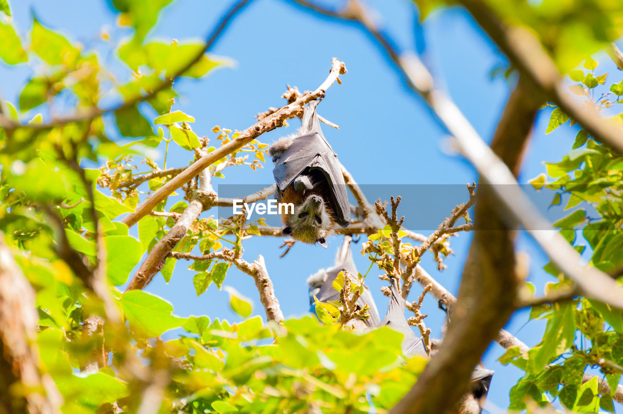 animal themes, animal wildlife, animals in the wild, animal, one animal, plant, bee, invertebrate, insect, low angle view, branch, selective focus, tree, nature, day, flower, growth, flowering plant, no people, beauty in nature, outdoors, pollination, flower head
