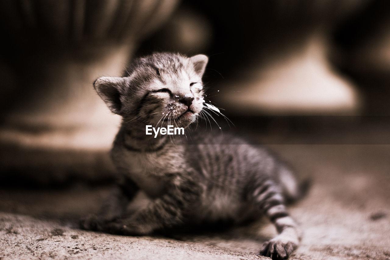 Close-Up Of Kitten Outdoors