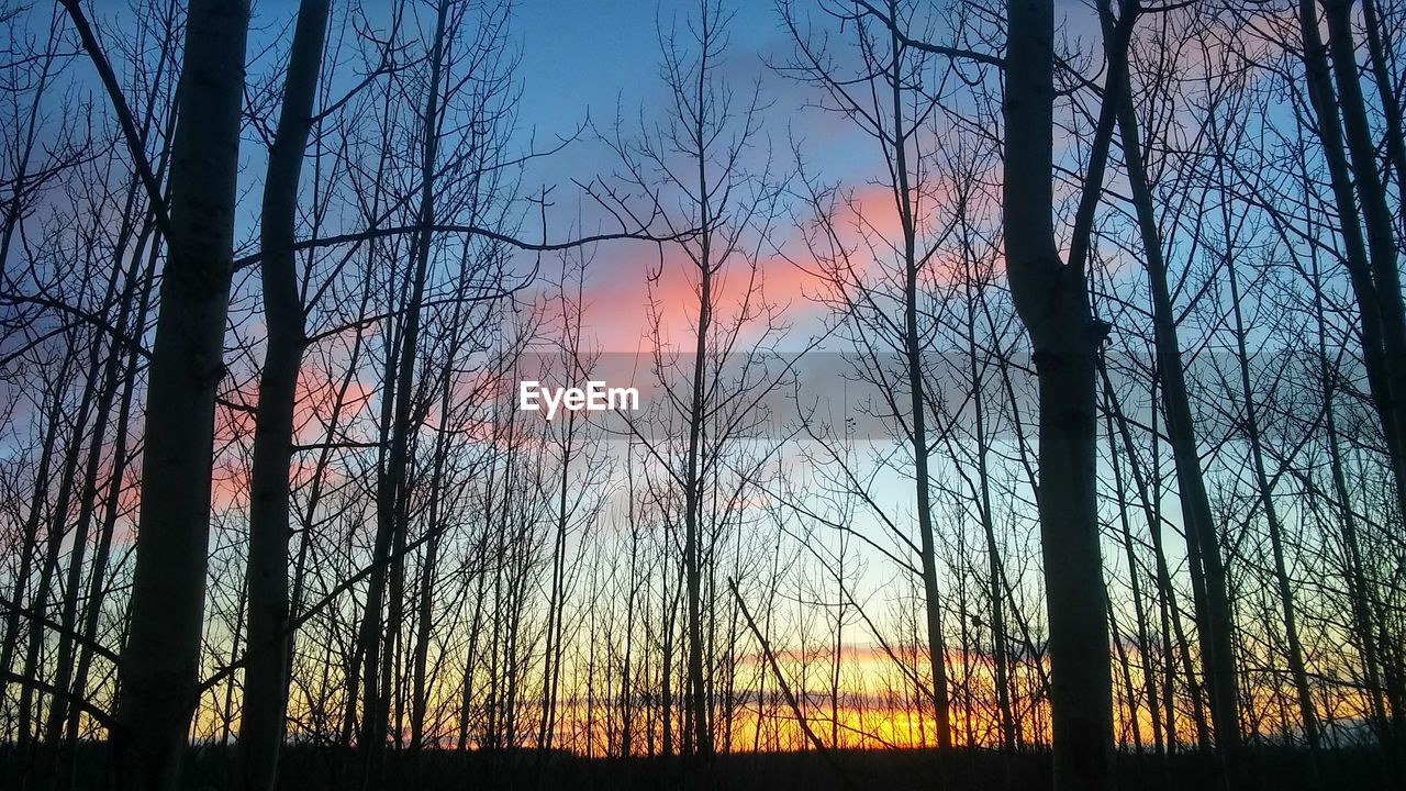 sunset, tree, bare tree, tree trunk, orange color, nature, forest, sky, forest fire, tranquil scene, no people, silhouette, beauty in nature, tranquility, scenics, outdoors, growth, landscape, sunlight, multi colored, branch, wilderness area, day
