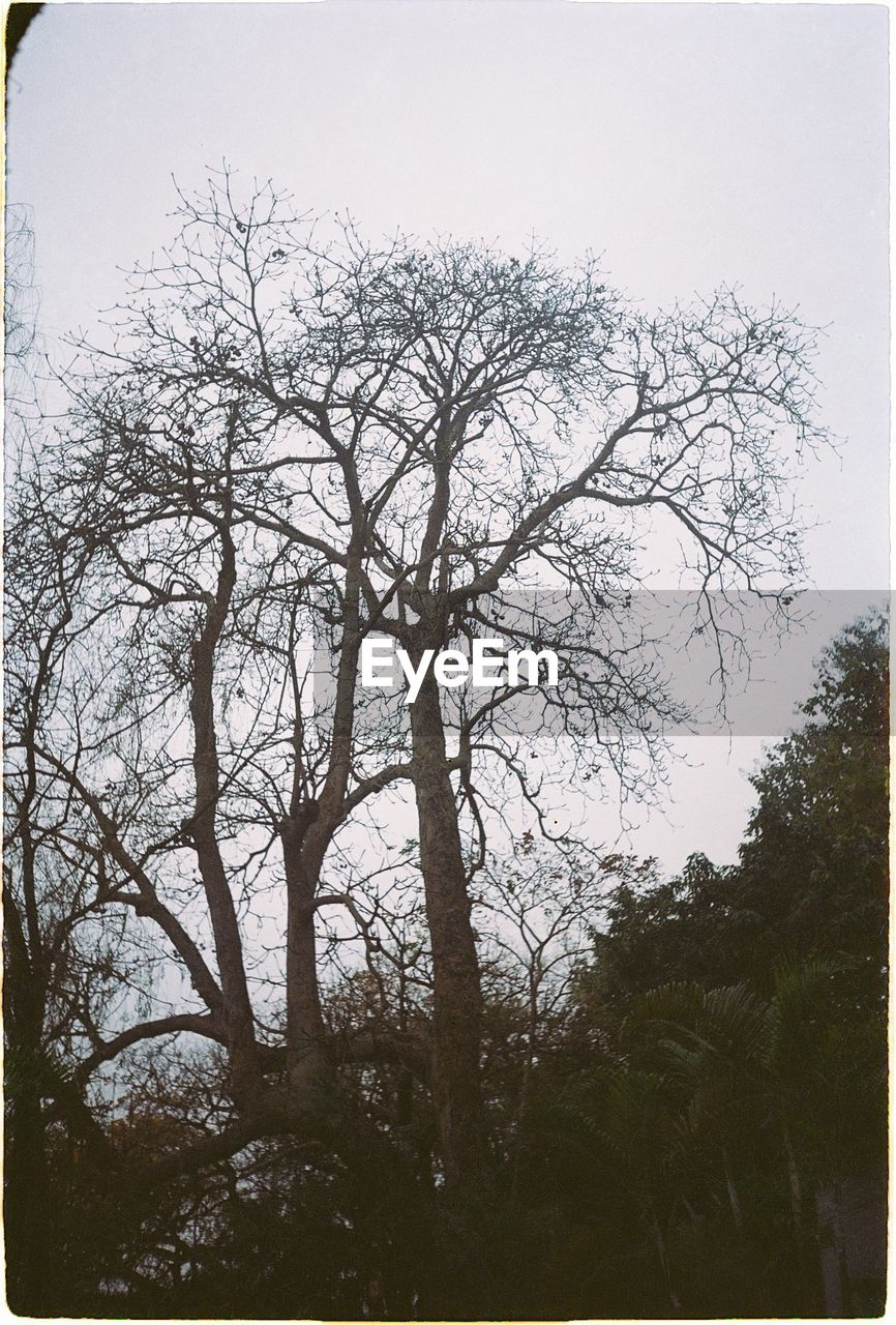 tree, low angle view, no people, nature, outdoors, day, branch, sky, beauty in nature, clear sky