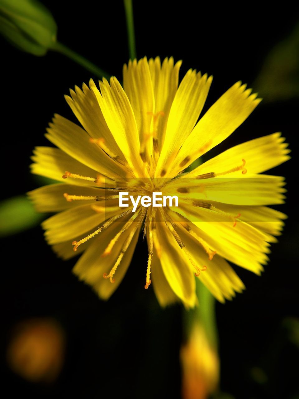 flower, yellow, fragility, petal, beauty in nature, nature, flower head, growth, plant, freshness, no people, close-up, outdoors, blooming, day