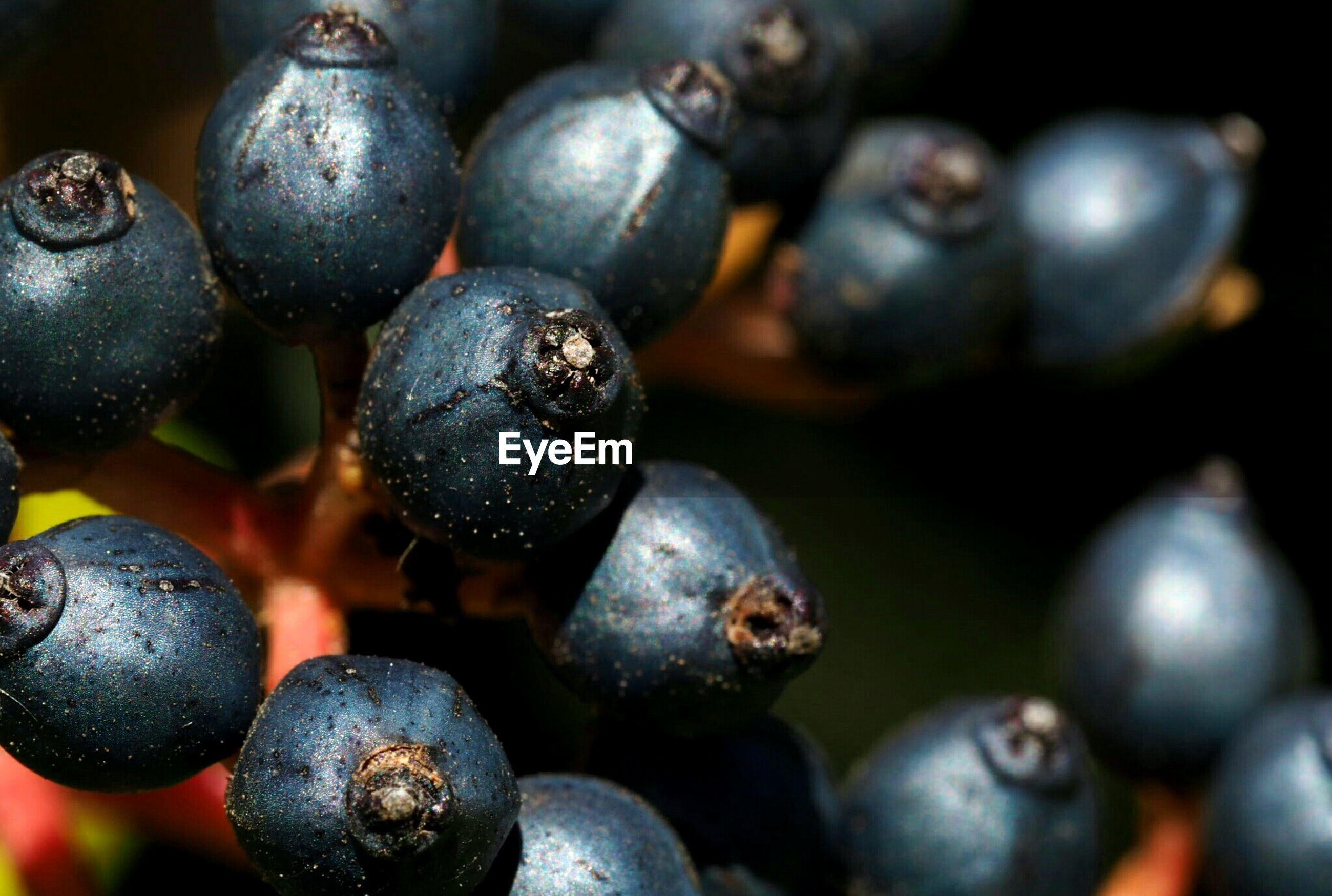 Close-up of fruits growing at night