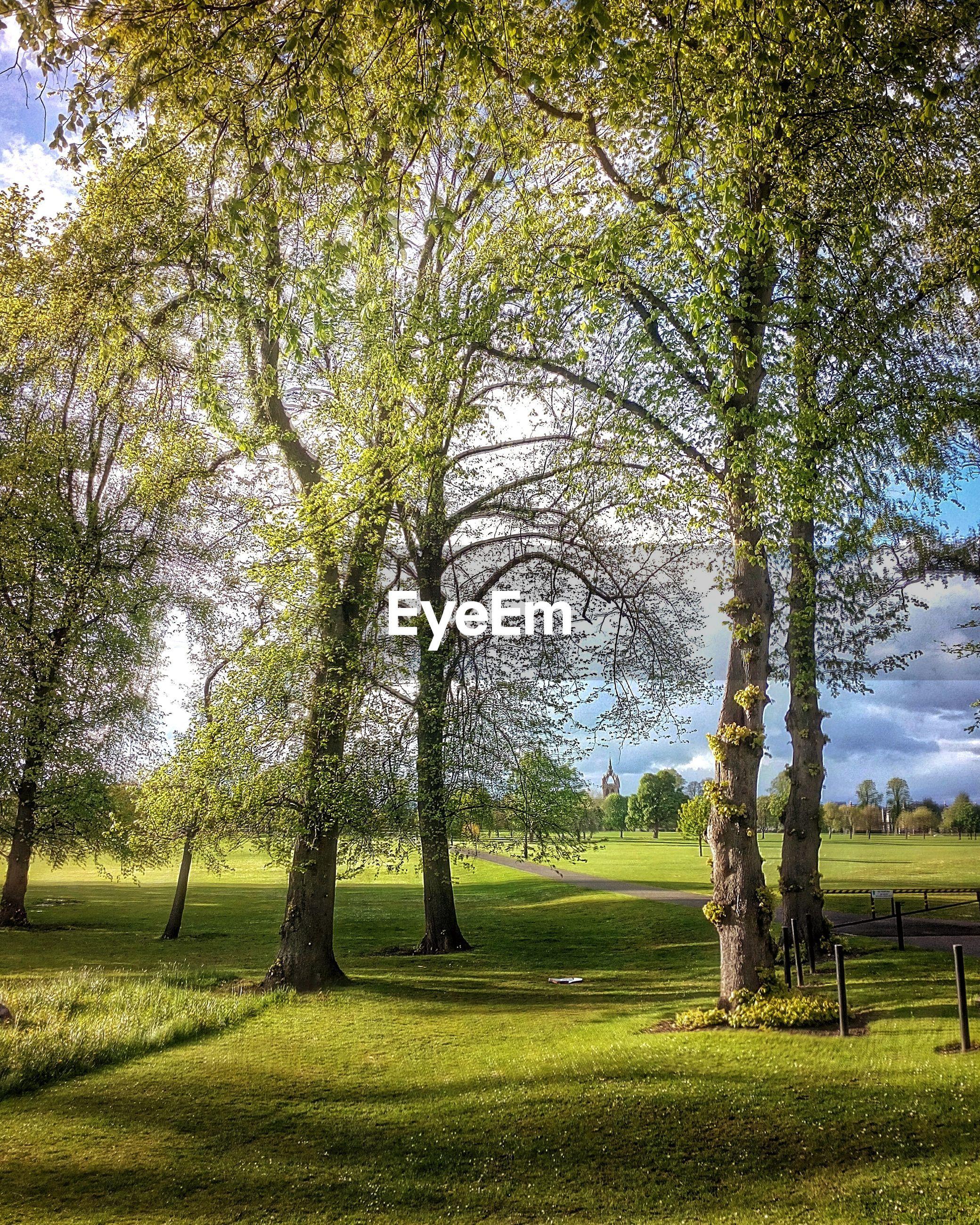 Trees on green field in park
