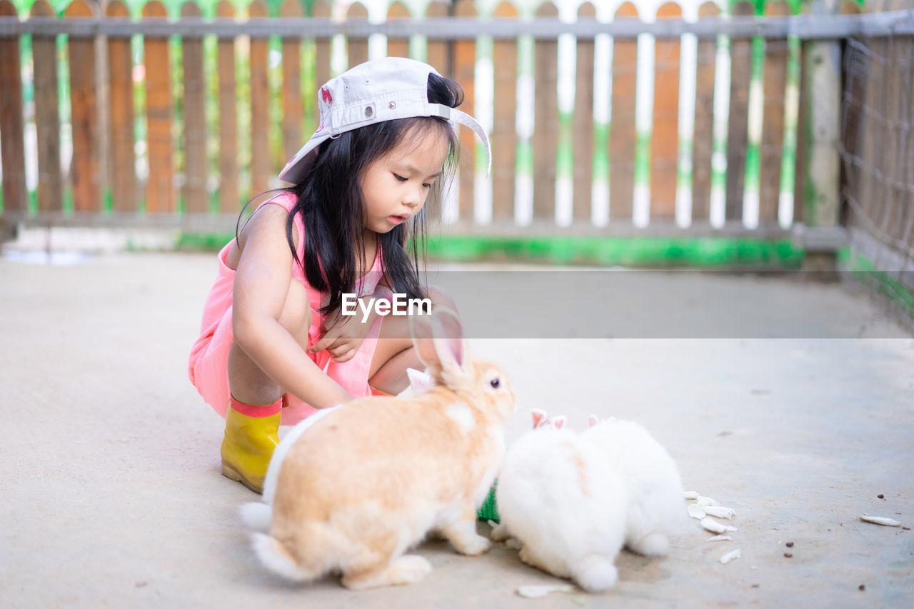 Girl looking at rabbits in yard