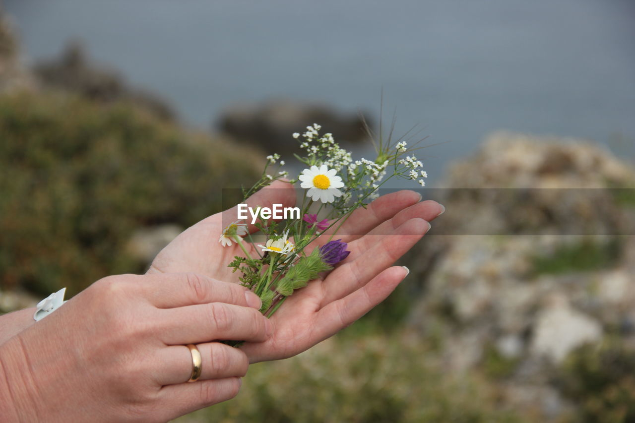 human hand, flower, hand, flowering plant, holding, plant, human body part, real people, nature, focus on foreground, people, vulnerability, freshness, fragility, lifestyles, leisure activity, close-up, day, women, body part, outdoors, finger, flower head, flower arrangement, bouquet, human limb