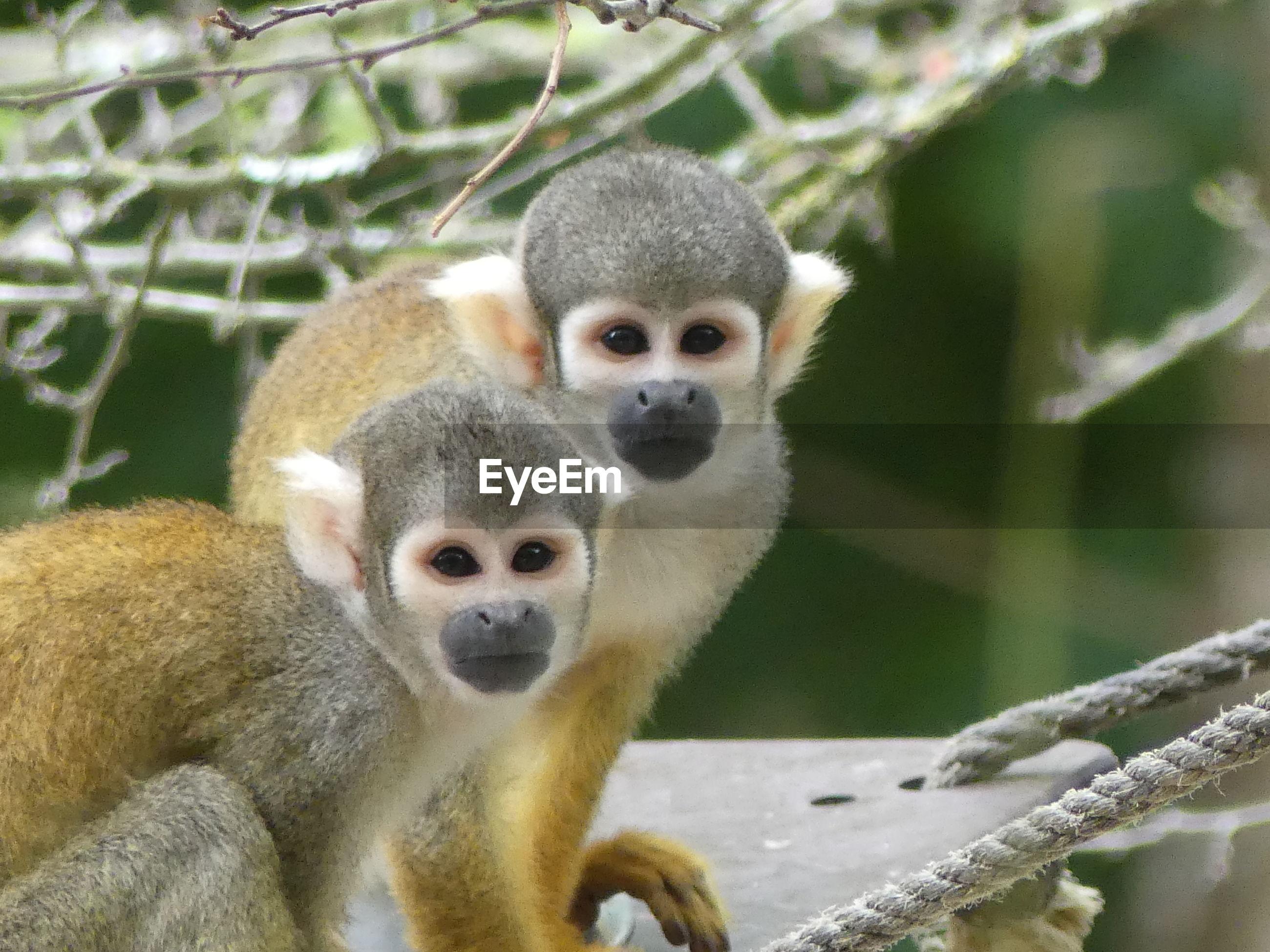Portrait of monkeys in zoo
