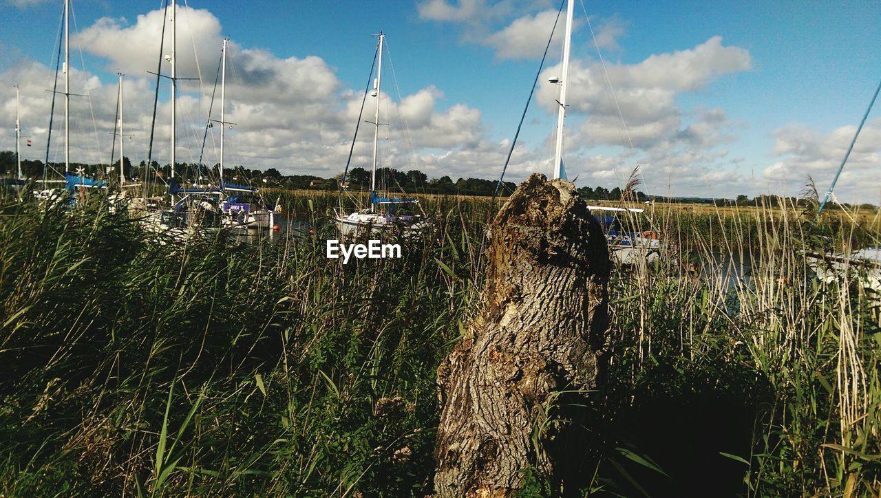 sky, nautical vessel, cloud - sky, mode of transport, transportation, no people, outdoors, nature, day, moored, grass, mast, beauty in nature, water