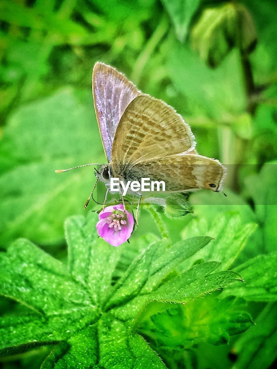 insect, animal themes, animals in the wild, one animal, leaf, butterfly, butterfly - insect, wildlife, nature, plant, green color, no people, close-up, outdoors, animal wildlife, growth, full length, perching, beauty in nature, fragility, day, spread wings, freshness