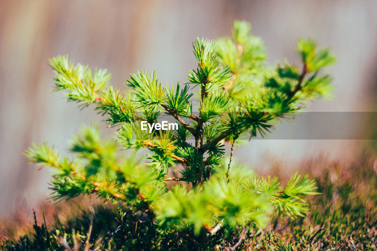 plant, growth, green color, no people, nature, selective focus, close-up, day, beauty in nature, focus on foreground, outdoors, tranquility, land, field, freshness, leaf, plant part, potted plant, high angle view, tree