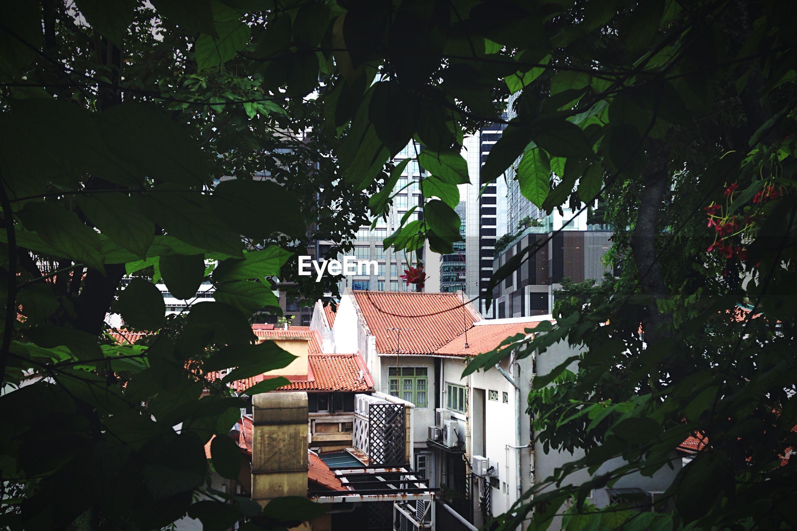 Buildings in city seen through tree